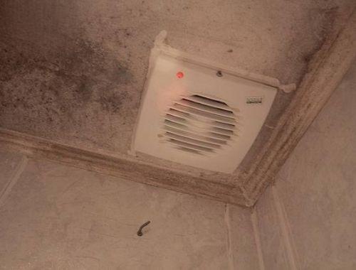 como quitar el moho del techo del baño