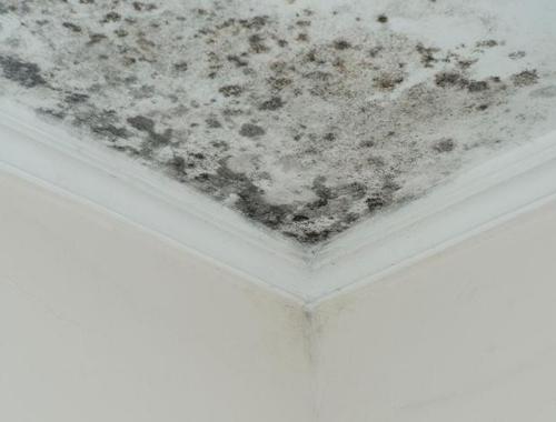 humedades en techos