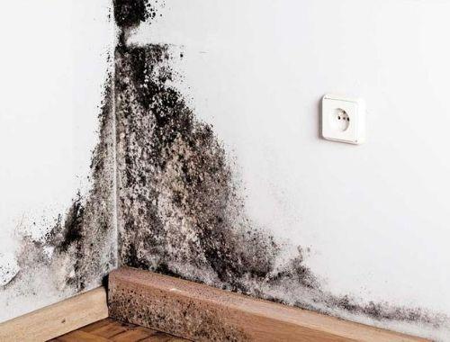 moho en paredes por condensacion