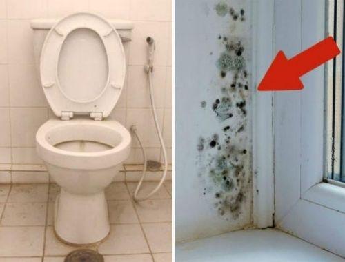 pintura para baños antihumedad