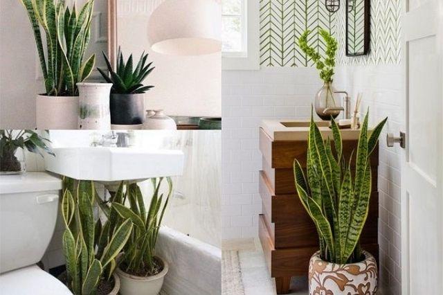 plantas para la humedad