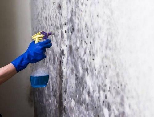 productos para la humedad en paredes interiores