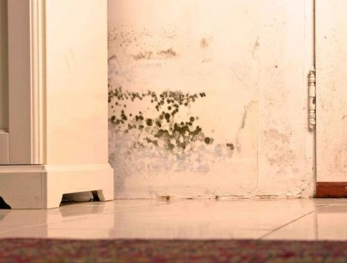 quitar olor humedad armario