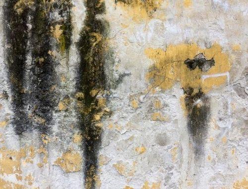 tratamiento de humedad en paredes